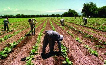 trabajadores, campo