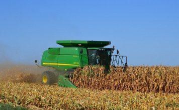 cosecha, maiz