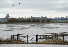 campo, inundacion