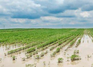 santa fe, inundación, campos