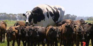 vacota