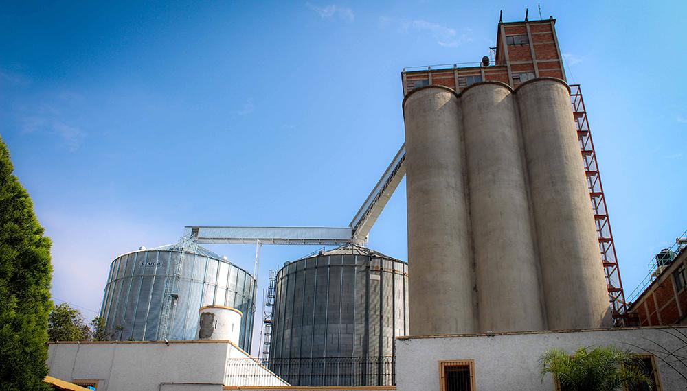 molinos, trigo