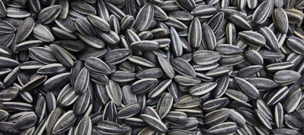 girasol semillas