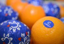 ledesma, fruta
