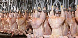 pollos, carne aviar