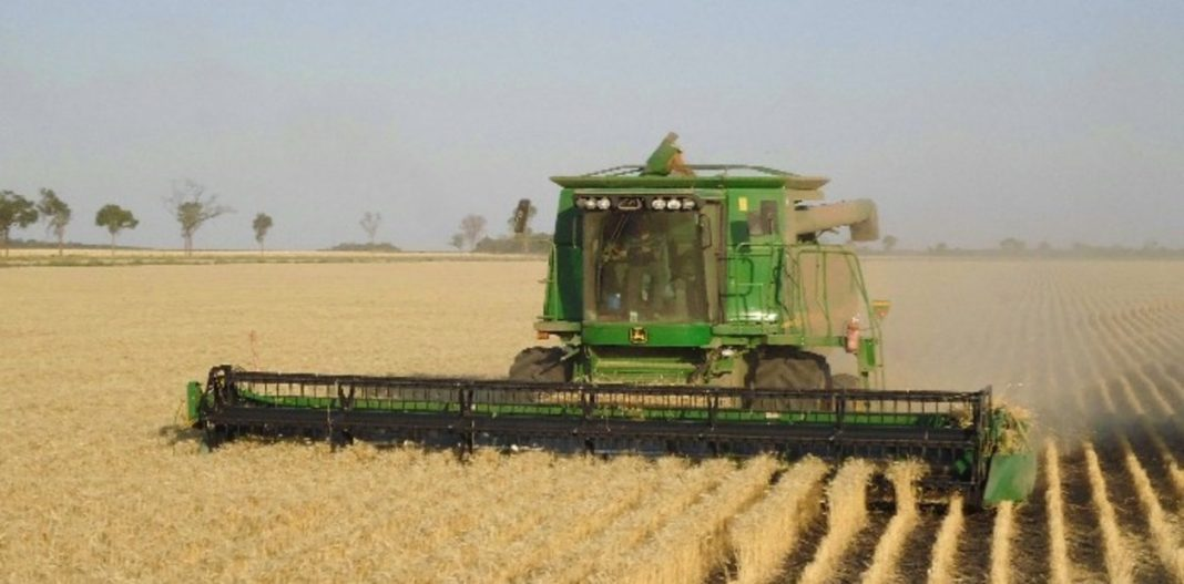 cosecha, trigo