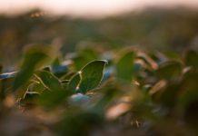fertilizar, tierra